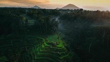 colline en terrasse en Indonésie photo