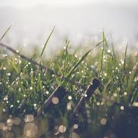 herbe avec rosée photo