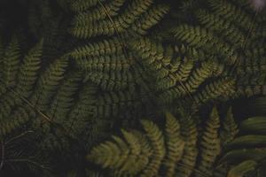 fougères de lac de rêve photo