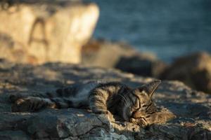 un chat endormi photo