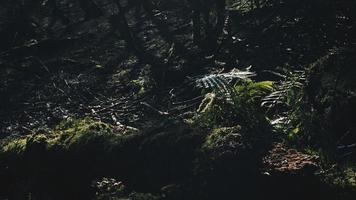 végétation dans une forêt