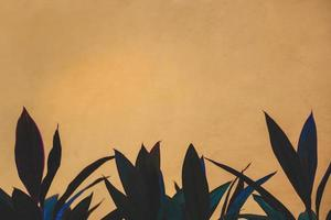 bordure de fleurs orange et noire photo