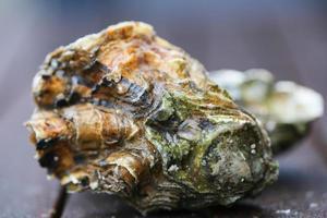 huîtres crues