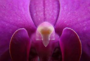 gros plan orchidée rose photo