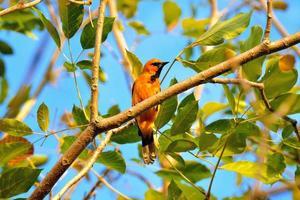 oiseau perché sur une branche