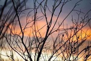 arbres nus pendant l'heure d'or