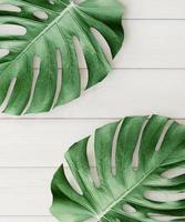 feuilles tropicales sur fond blanc en bois photo