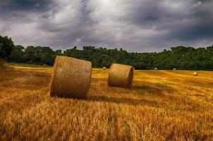 champ de blé après la récolte