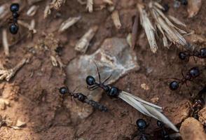 vue rapprochée des fourmis travaillant photo