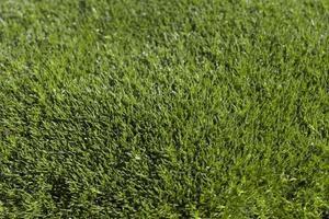 tache d'herbe ensoleillée
