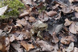 grenouille dans la forêt