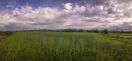 champ herbeux avec des nuages