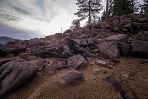 rivage rocheux avec des arbres