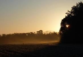 brume matinale au lever du soleil