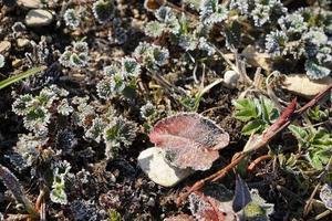 feuilles et plantes congelées