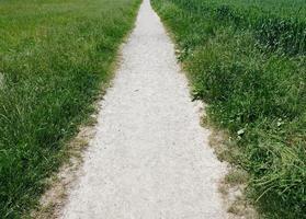 chemin entre deux champs verts photo