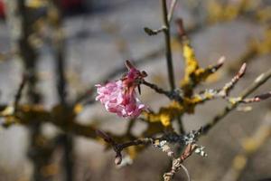 fleur sur un arbre