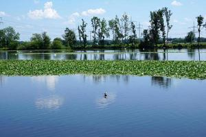 Danube à ulm