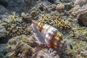 coquillage avec bernard-l'ermite photo