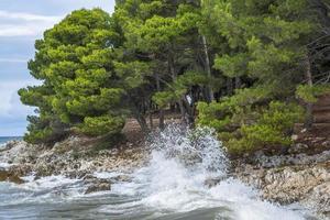 vagues de la mer côtière