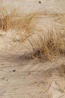 herbe brune sur sable brun photo
