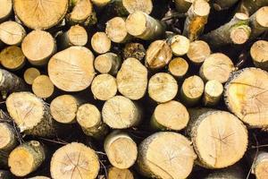 tas de bûches de bois