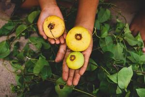 personne tenant des fruits ronds photo