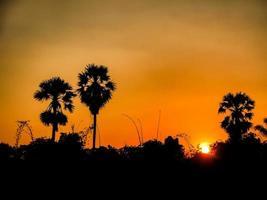silhouette de palmiers
