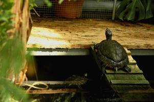 tortue dans un jardin