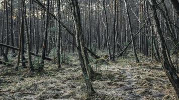 arbres de la forêt mystique photo