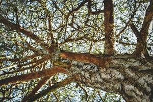 vue au niveau du sol de l'arbre