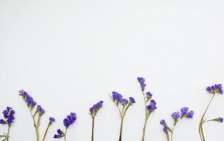 poser à plat avec des fleurs violettes