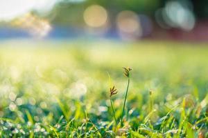 gros plan, herbe, dans, a, champ photo