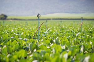 arroseurs dans un champ vert