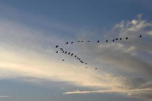 oiseaux qui volent au coucher du soleil photo