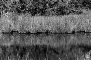 paysage de marais tropical photo