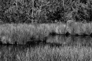 paysage de zones humides tropicales photo