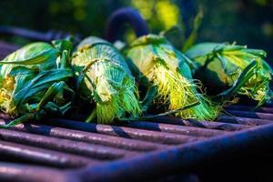 torréfaction de maïs frais