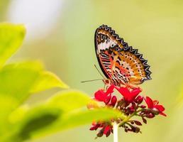 beau papillon et fleurs