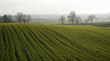 champ herbeux vert avec des arbres photo