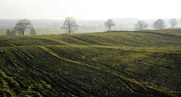 champ vert et arbres