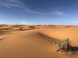 herbe sur le désert du sahara