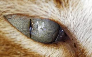 gros plan, de, oeil de chat