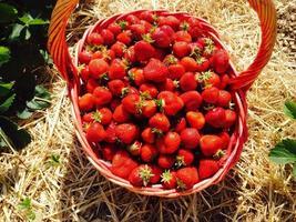 un panier de fraises