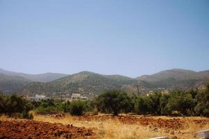 oliveraie avec des montagnes en crète photo