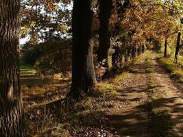 heure d'or sur une route près des bois