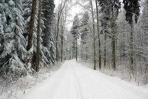route dans la forêt photo