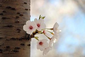 fleurs sur tronc d'arbre