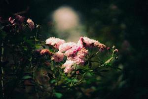 buisson de fleurs en fleurs