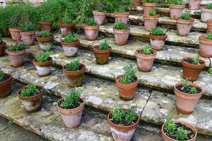 pots de fleurs dans les escaliers